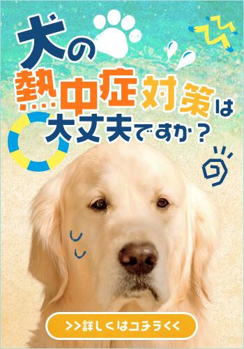 犬の熱中症対策してる?